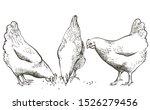 hand drawn vector chicken  hen. ... | Shutterstock .eps vector #1526279456