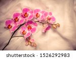 The Branch Of Purple Orchids O...