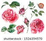 decorative vintage watercolor... | Shutterstock . vector #1526354570