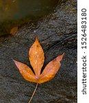 Single Autumn Tropical Orange...