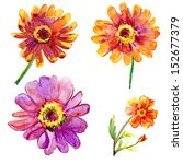 Set Of Watercolor Gerber Flowers