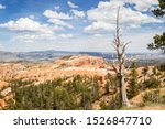Dead Tree At Bryce Canyon...