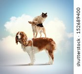 Stock photo three home pets next to each other on a light background funny collage 152689400