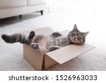 Cute Grey Tabby Cat In...