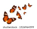 Flock Of Tropical Butterflies...