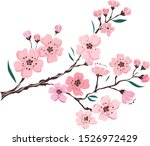 Branch Of Cherry Blossom On...