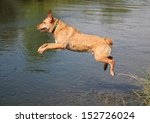 a labrador retriever jumping in a canal - stock photo