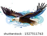 Soaring Bald Eagle.  Color ...
