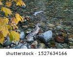 Squamish  Bc Canada October 5 ...