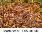 Colorful Fallen Leaves Cover...
