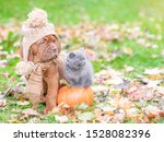 Stock photo puppy in a warm hat sitting with a kitten on autumn foliage with a pumpkin and looking away empty 1528082396