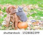 Puppy And Kitten Sitting...