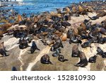 A Lot Of Cape Fur Seal At Seal...