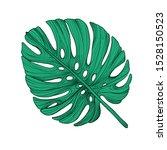 monstera deliciosa plant leaf... | Shutterstock .eps vector #1528150523