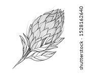 king tropical protea. vector... | Shutterstock .eps vector #1528162640