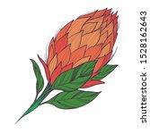 king tropical protea. vector... | Shutterstock .eps vector #1528162643