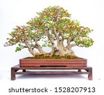 Chinese Bonsai Trees Made From...
