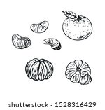Mandarin Fruits In Line Art...
