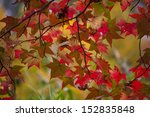 Colorful Autumn. Autumn In New...