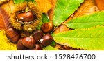 Ripe Chestnuts Close Up With...