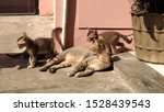 Stock photo cat and it s kittens sunbathing in the morning kittens are playing arround her 1528439543