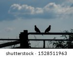 Silhouette Of A Pair Of...