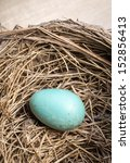 A Real Blue Robin's Egg In A...