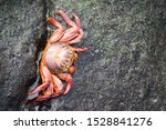 Red Crab On A Rock  Galapagos ...