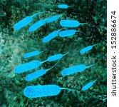 e coli bacteria   3d rendered... | Shutterstock . vector #152886674
