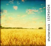Ripe Wheat Field At Sunset In...