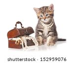 Stock photo cute kitten with jewel box with pearl necklaces isolated on white background 152959076