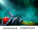 Small photo of Black snake with an apple fruit in a branch of a tree. Forbidden fruit concept.