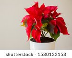 red christmas poinsettia in a... | Shutterstock . vector #1530122153