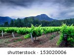 hunter valley vineyards  | Shutterstock . vector #153020006