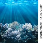 tranquil underwater scene with... | Shutterstock . vector #153072389