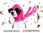 Stock photo chic fashionable diva luxury cool dog with funny sunglasses scarf and necklace isolated on white 1530899090