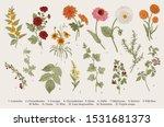 Vintage Vector Botanical...
