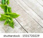 Harvesting Fresh Mint Leaves In ...