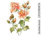 rose bouquet floral botanical...   Shutterstock . vector #1531985876