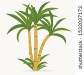 sugar cane. cane plant ... | Shutterstock .eps vector #1532037173