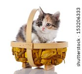 kitten in a wattled basket.... | Shutterstock . vector #153206333