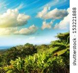 wonderful trees and vegetation... | Shutterstock . vector #153221888