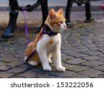 Stock photo cute red kitten on a cat leash tied to a bench on a street 153222056