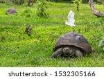 Stock photo animals galapagos giant tortoise with egret bird on santa cruz island in galapagos islands 1532305166
