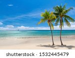 Coco Palms On Sunny Beach And...