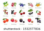 Set Of Vector Berries Isolated. ...