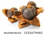 Ripe Open Camellia Nuts With...