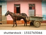 Horse With A Cart Taxi Waiting...