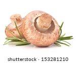brown champignon mushroom and... | Shutterstock . vector #153281210