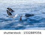 Stock photo herring gull larus argentatus in park 1532889356